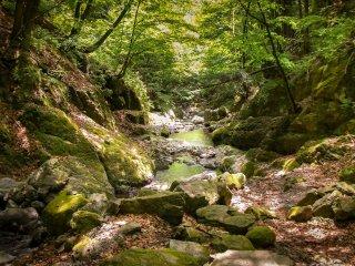 Most of this trail will traverse along the Kawakotetani River