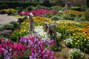 Colorful flowerbeds and driftwood art at Tsumekizaki Park