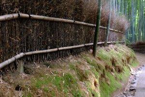 Walk through Arashiyama bamboo forest on the way to the entrance