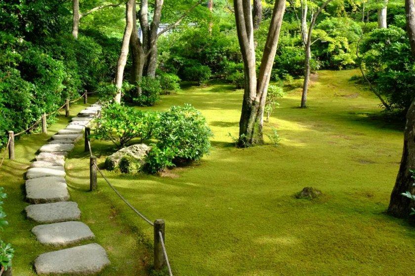 Stunning moss lawn