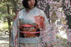 Девушка в кимоно и сакура