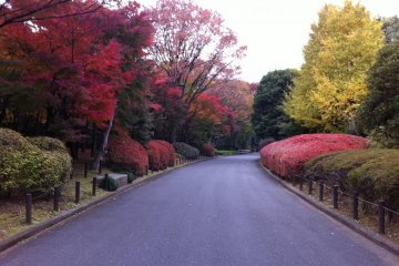 Near the Gardens in Autumn, breathtaking colors!