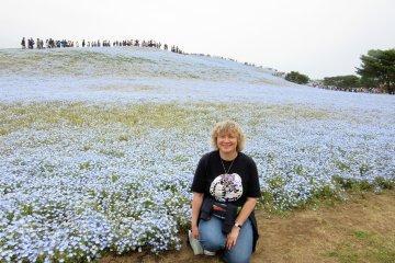 Огромные поля голубых цветов