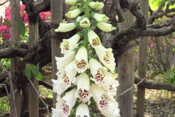 В парке цветов Асикага