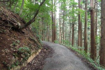 Trail to Monkey Park