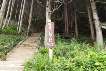 Another steep stairway up to Monkey Park
