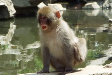 Nagano: From Monkeys to Temples