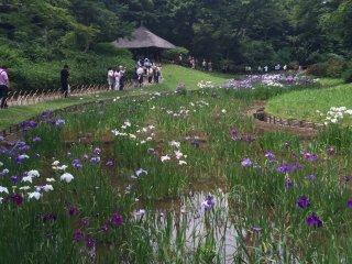 The garden is in full bloom in May.