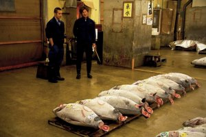 Tuna Auction in Tsukiji fish market