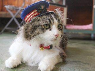 """후쿠시마 아이즈 와카마쓰 지역의 아시노마키 온센의 고양이 역장 """"러브""""를 만나보시길"""