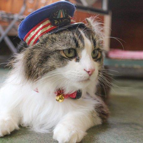 Le Chat Chef de Gare de Ashinomaki Onsen