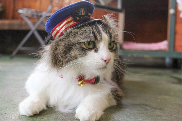 Kucing master stasiun di Ashinomaki Onsen