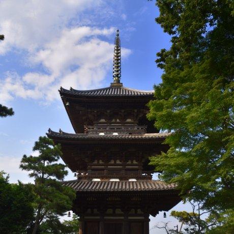 First Time Visit to Sankeien Garden