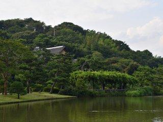 夏の三溪園大池