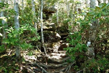 На пути попадаются корни деревьев и камни