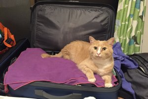 Our host's cat adopted us right away, luggage included