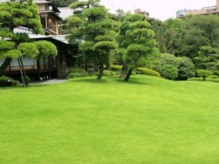 Green hill in the middle of the garden