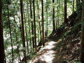 Trilho pelo meio das árvores