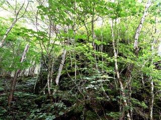 Cây non bảo vệ bề mặt của đá