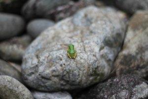 神服織機殿神社裡發現的小青蛙