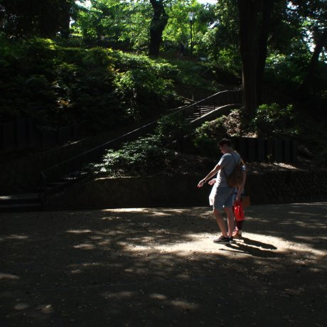 모토마치 공원의 매미들