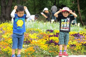 May 5 was the Boy's Holiday in Japan