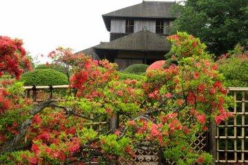 Дом Кобунтэй и кусты азалии