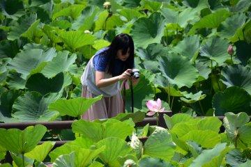 Девушка близко фотографирует лотос