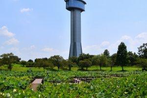 古代蓮会館の展望タワーは天に向かって咲く蓮の花をイメージして建てられたそうだ。