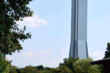 Одинокий лотос и обзорная башня на фоне