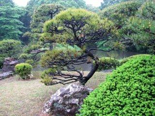 В японском саду обязательно есть камни