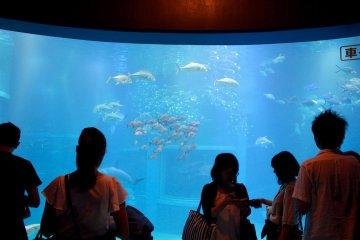 游客观察大阪海游馆主水族箱中的鱼。