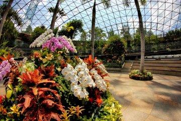Exotic flowers inside the globe
