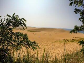 ทางทิศตะวันออก คุณสามารถมองไปยังเนินทรายผ่านต้นไม้