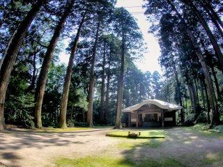 Những cây trong rừng cao và hàng trăm năm tuổi