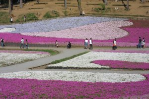 Кроме преобладающего розового цвета, были рисунки голубого и белого цветов