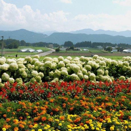 Viagem de Verão a Gunma