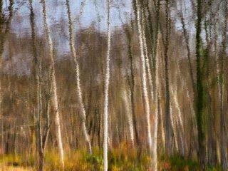 Những rặng cây phản chiếu trên dòng nước trong vắt