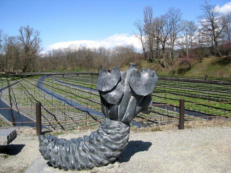 Ферма васаби Дайо в начале апреля и скульптура корня васаби