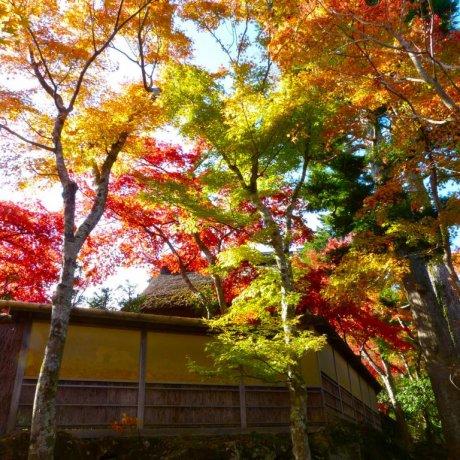 Hakone Museum of Art, Garden