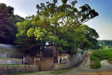 ศาลเจ้าคะโมะในอิมะบะริ