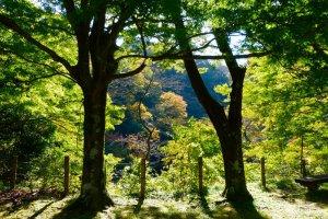 木立を通る優しい風が心地よい