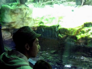 Father and son watching penguins and discussing
