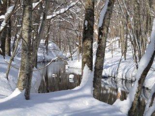 เดินป่าด้วยสโนว์ชูว์ใกล้ๆ กับซึตตะ ออนเซ็น