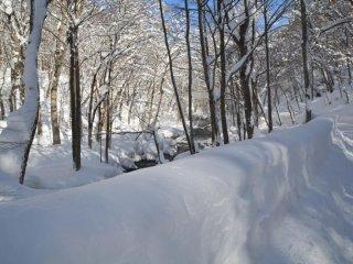 แดนมหัศจรรย์ฤดูหนาว