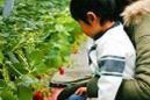Petits et grands pourront se régaler à cueillir les fruits du verger