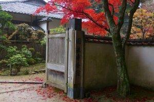 ใบเมเปิลญี่ปุ่นสุดเหลือเชื่อ