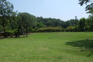 Green space within the concrete confines of Tokyo