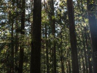 Rừng cây kia giống như một cái gì đó từ những bộ phim