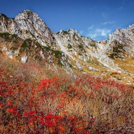 สีสันฤดูใบไม้ร่วงที่ภูเขา Kiso-koma